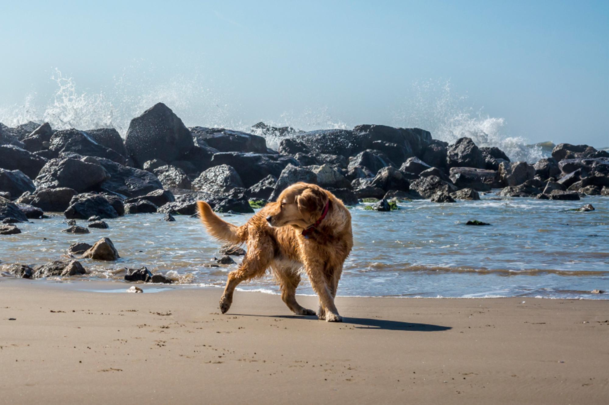 single mit hund urlaub)